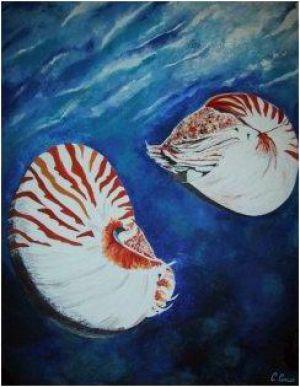 Nautiles Nacrés © Claudia Concas