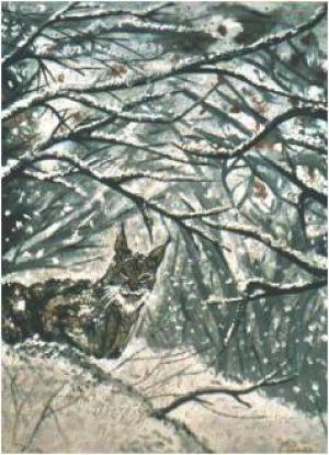 Lynx du Nord du Canada © Claudia Concas
